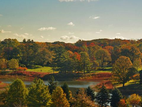 Buntes Herbstlaub am Round Meadow Lake