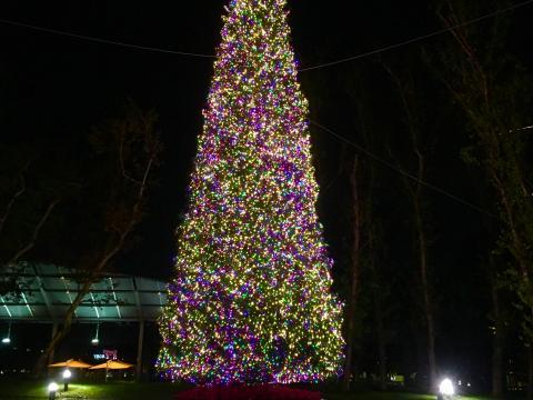 Der beleuchtete Weihnachtsbaum im Town Center Park