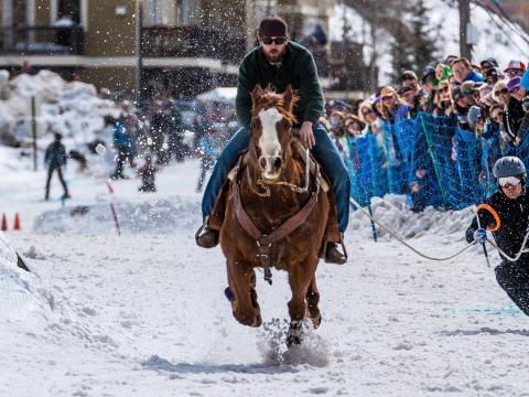 Skijöring-Fahrer mit Pferd bei den Skijor West Championships in West Yellowstone
