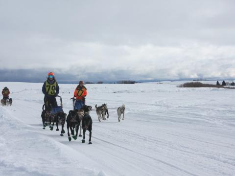 Teilnehmer beim Hundeschlittenrennen American Dog Derby in Idaho